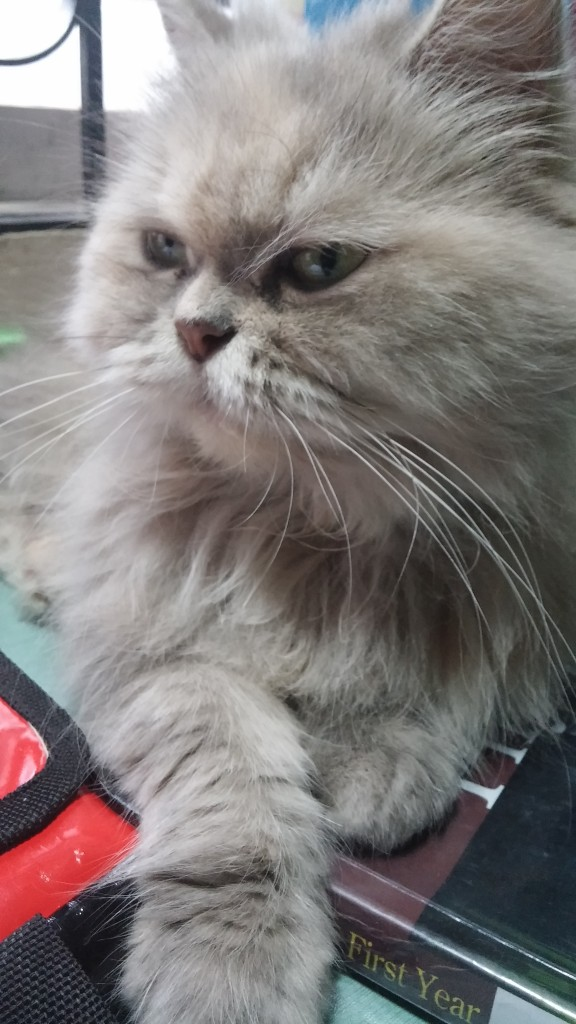 Our pet cat Fluffy